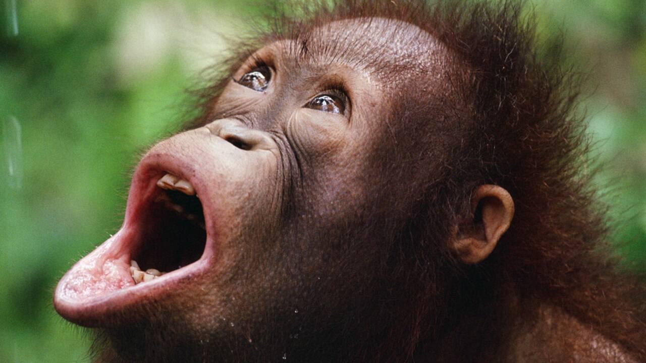 Faut-il créer un comité d'experts scientifiques sur la biodiversité ?