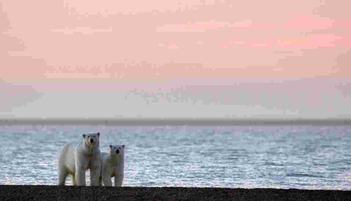 Intensifier l'exploitation pétrolière en Alaska : pour ou contre ?