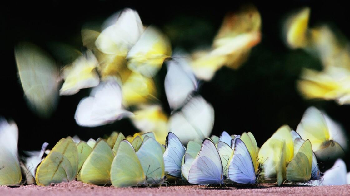 La sauvegarde de la biodiversité doit-elle être une priorité pour l'UE ?
