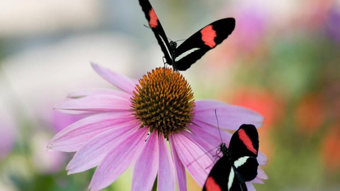 Constatez-vous un appauvrissement de la biodiversité autour de vous ?