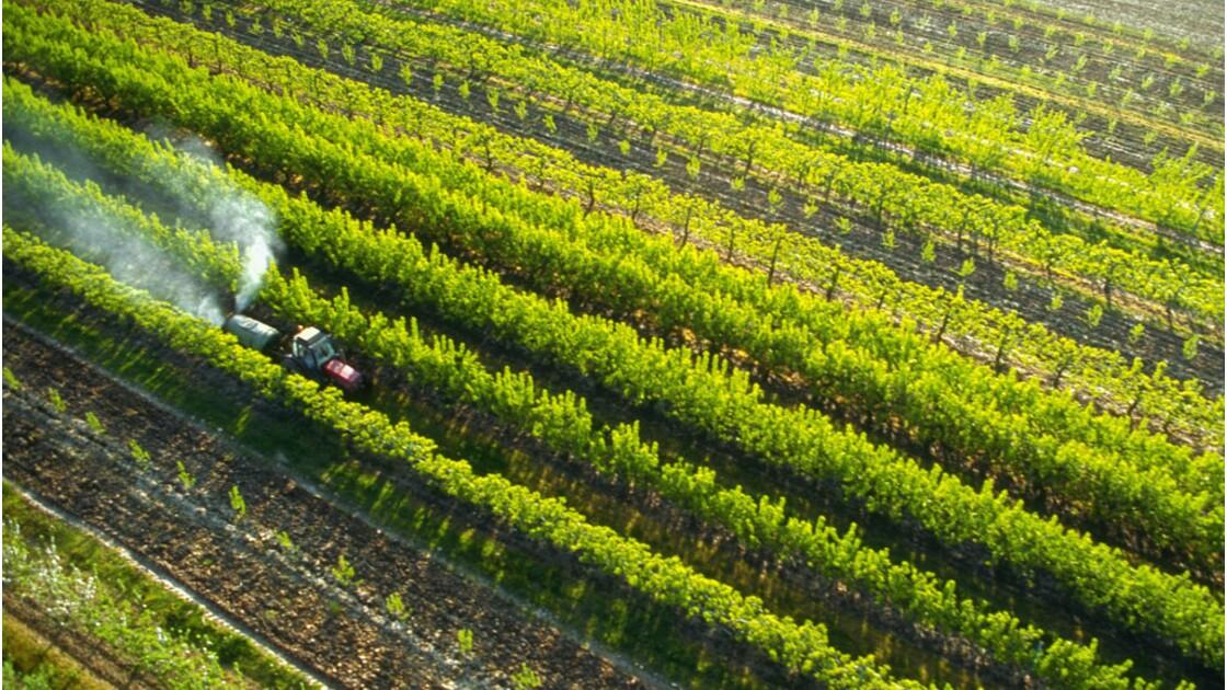 Pesticides : la France peut-elle diviser sa consommation par 2 ?