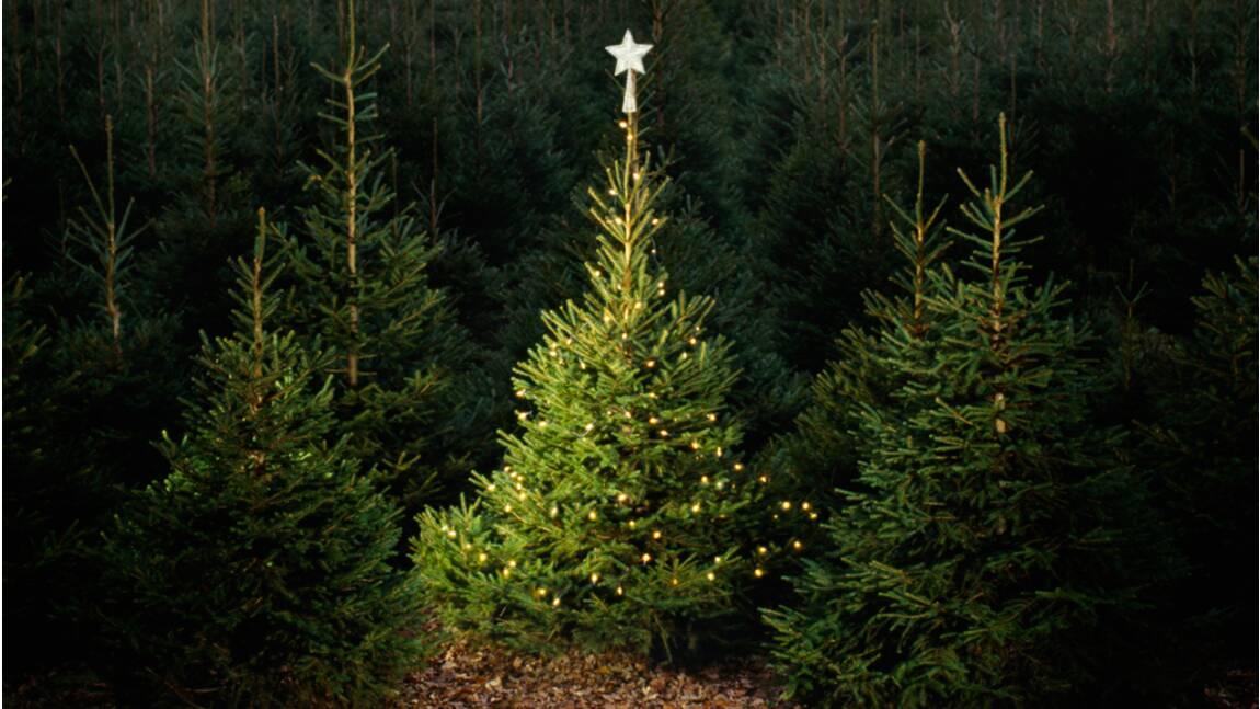 Sapin de Noël : faut-il préférer le synthétique au naturel ?