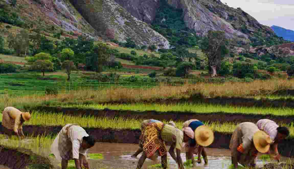 Les pays riches peuvent-ils exploiter des terres en Afrique pour leur propre approvisionnement ?