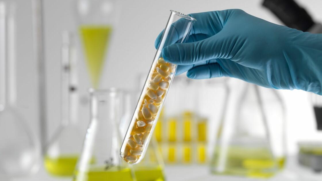 OGM : les tests scientifiques doivent-ils être rendus publics ?