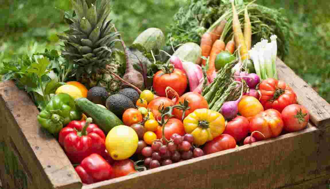 Crise alimentaire : faut-il arrêter l'agriculture bio ?