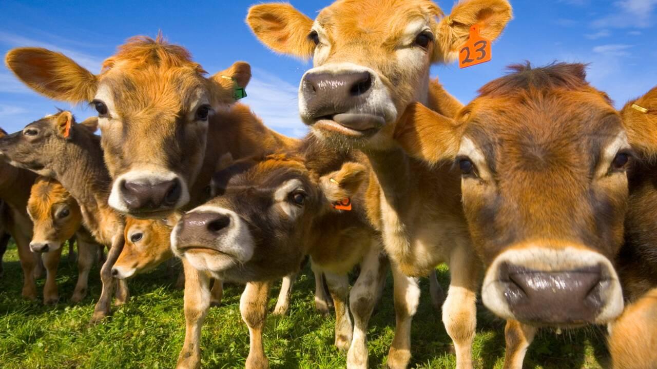 Réchauffement climatique : réduirez-vous votre consommation de viande ?