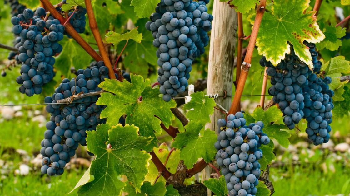 Faut-il assouplir les normes françaises sur les pesticides ?