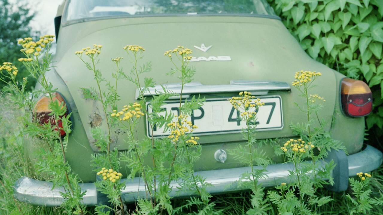 Croyez-vous en l'engagement écologique des grandes marques de voitures ?
