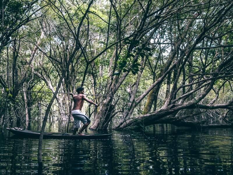 La rivière se mélange à la végétation et regorge de piranhas, pirarucus, surubins ou aracus