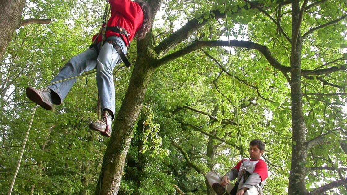 Grimper aux arbres dans le Morvan