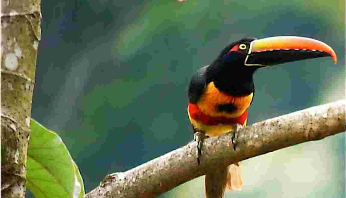 Découverte écoculturelle du Costa Rica