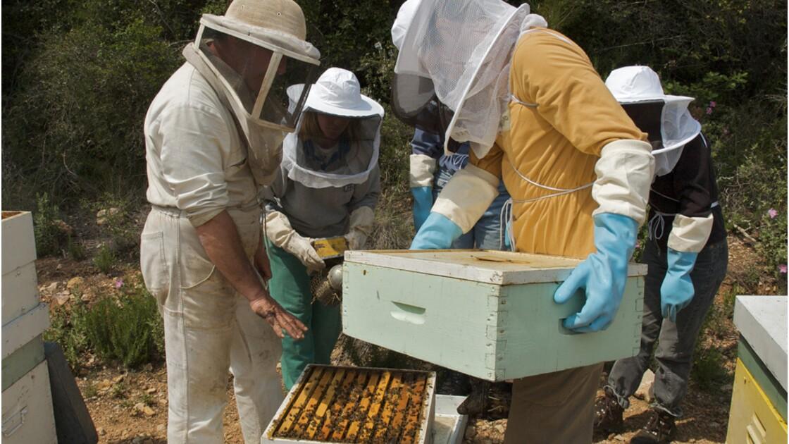 Faire son propre miel dans le Val-de-Marne