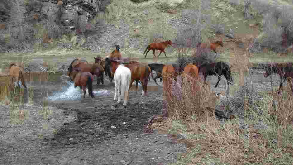 États-Unis : balades équestres dans le Far West