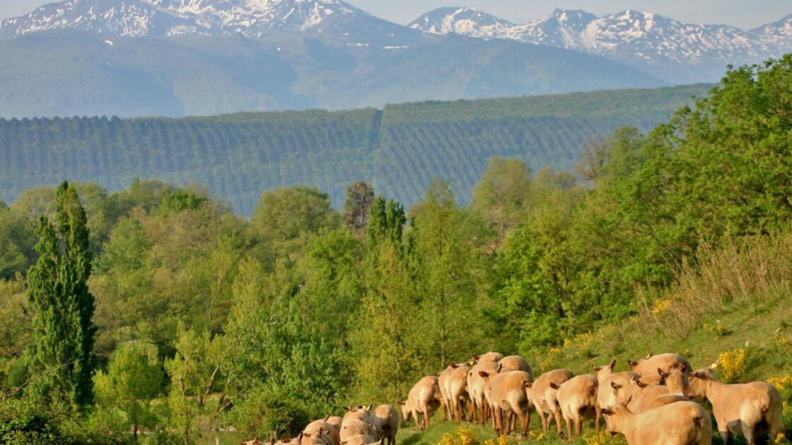 Camping éco-responsable en Ariège