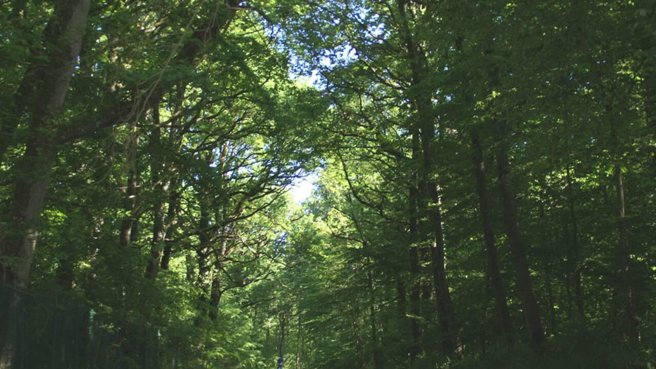 Ile-de-France : balade à vélo dans la forêt de Dourdan