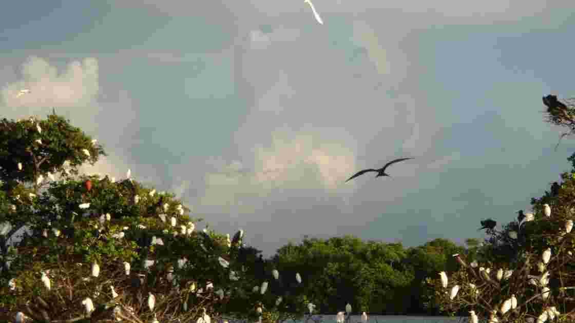 Découverte de la mangrove de Guadeloupe en VTT des mers
