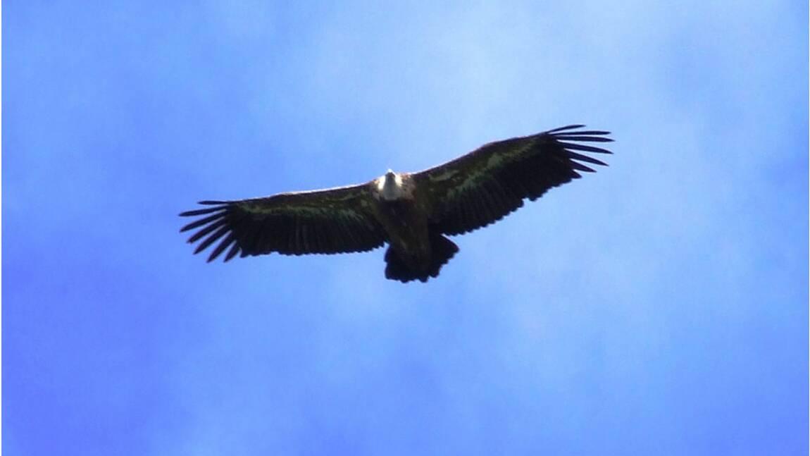 Pyrénées : à la découverte des rapaces de la réserve du Pibeste