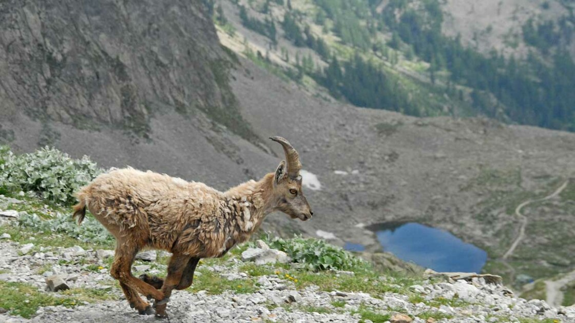 Parc national du Mercantour : la biodiversité grandeur nature