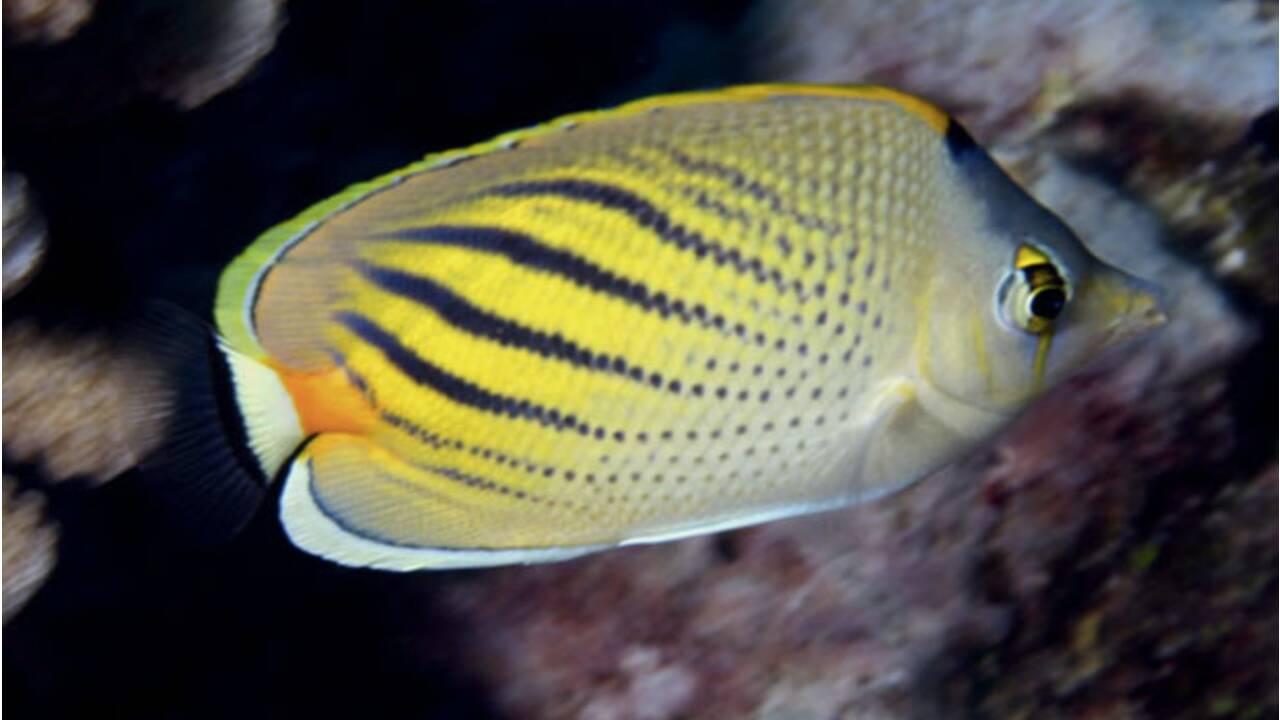 Protéger les écosystèmes marins en Polynésie