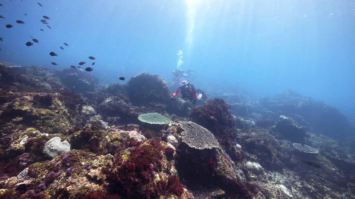 VIDÉO - Au Japon, un laboratoire naturel sur la survie des coraux