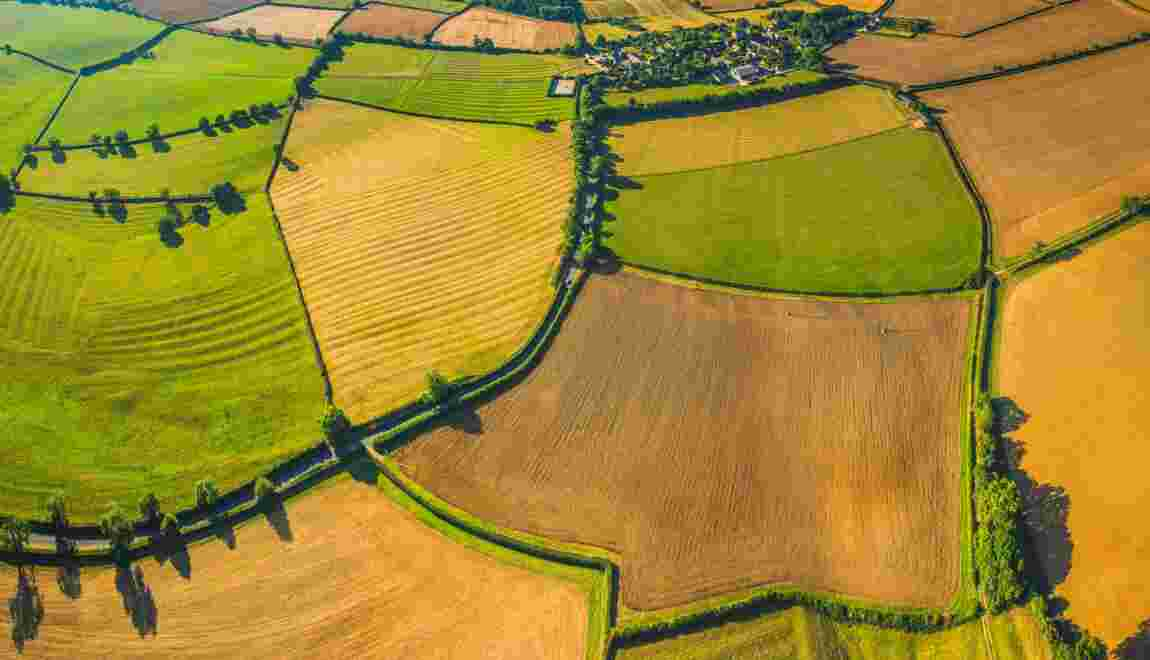 Terre arable : le pillage des ressources agricoles