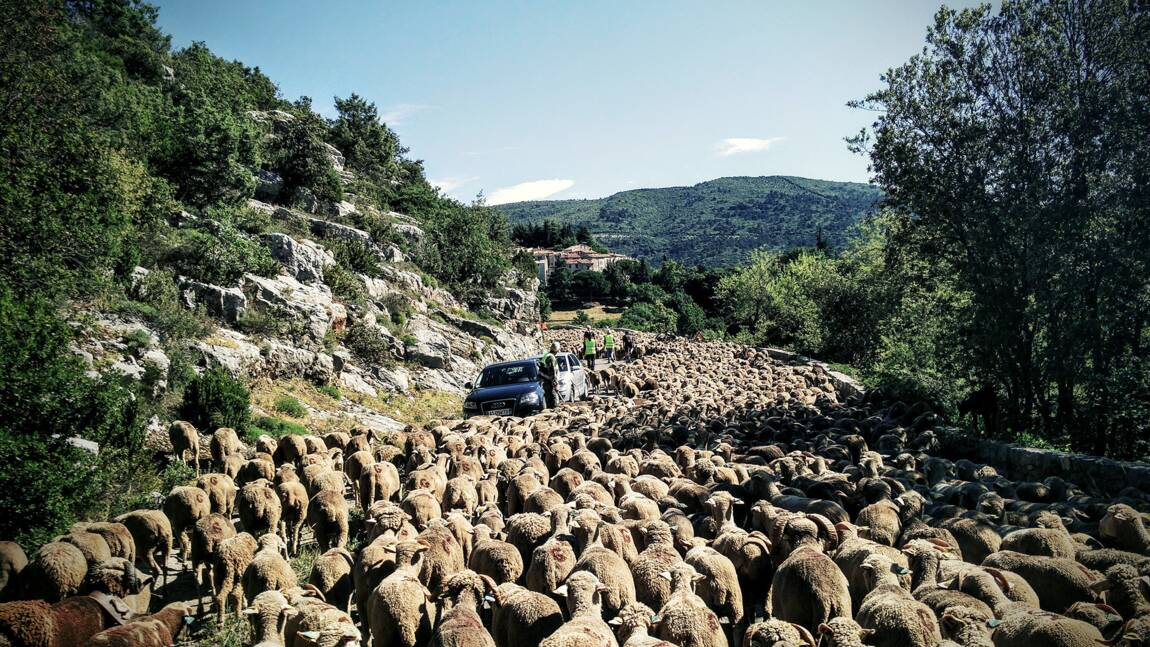 Avec les nomades des estives en Provence