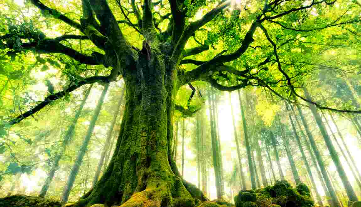 Les arbres, aussi sensibles que les humains ?