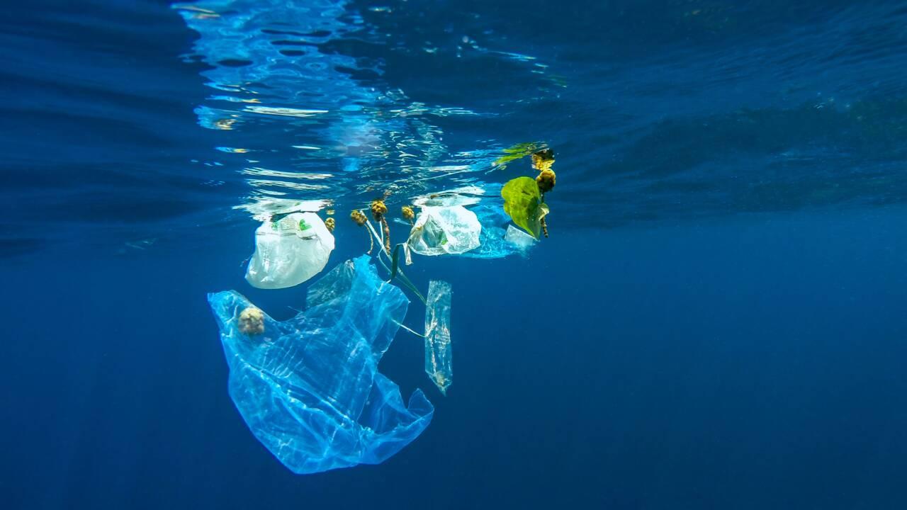 Un sac plastique chilien 100% biodégradable en cinq minutes