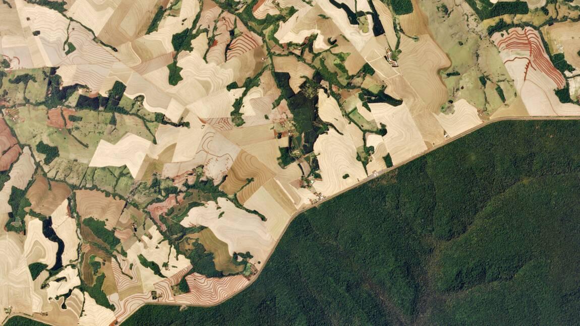 Amérique du Sud : trois lieux touchés par la déforestation