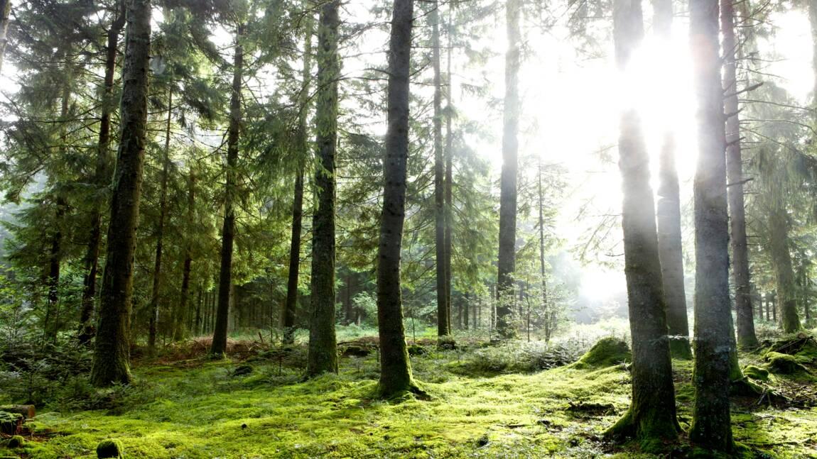 A quoi ressemblait une forêt il y a 13 000 ans ? Bientôt la réponse dans le Tarn !