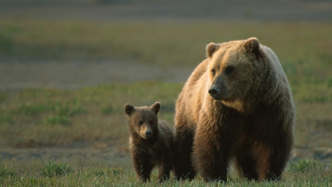 Trump autorise la chasse dans des réserves protégées en Alaska