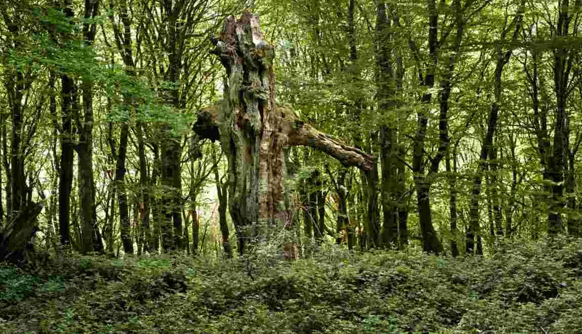 Mystères de Bourgogne : Bibracte, la capitale disparue des Éduens