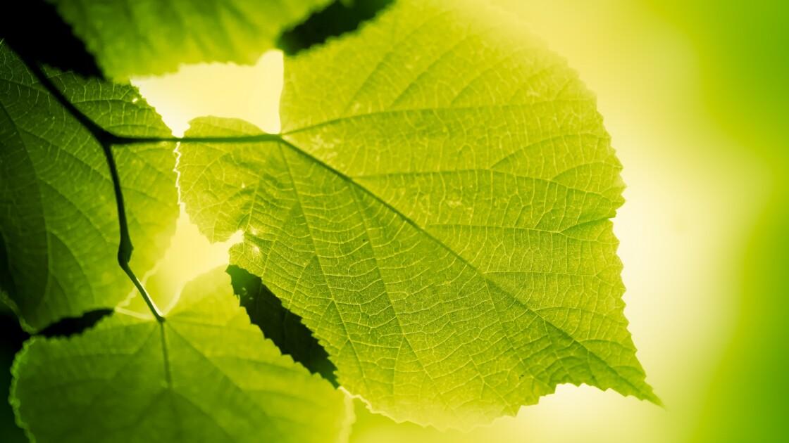 Vous reprendrez bien un peu de photosynthèse ?