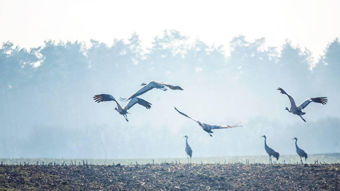 Les zones de protection spéciale, la protection des oiseaux à l'échelle européenne