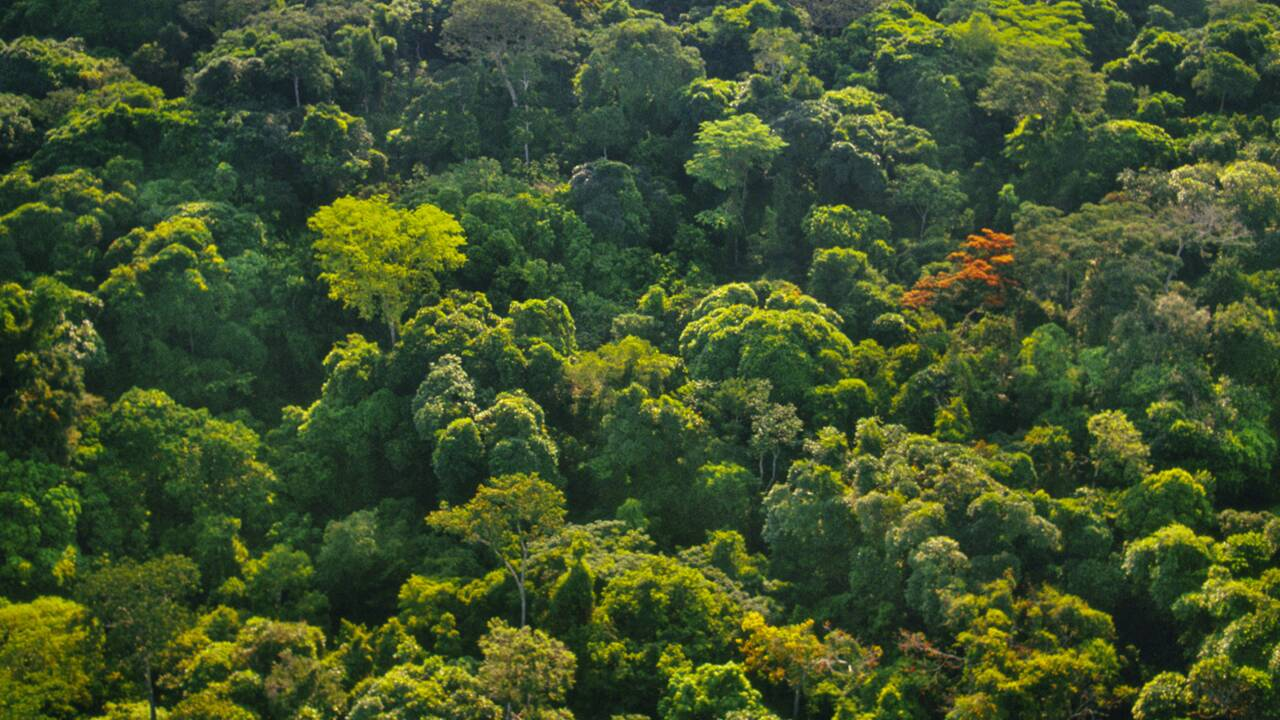 """La """"REDD"""", ou comment encourager la préservation des forêts"""