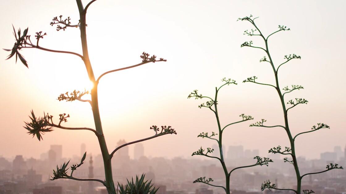 VIDÉO - En Egypte, le rêve d'un Caire plus vert