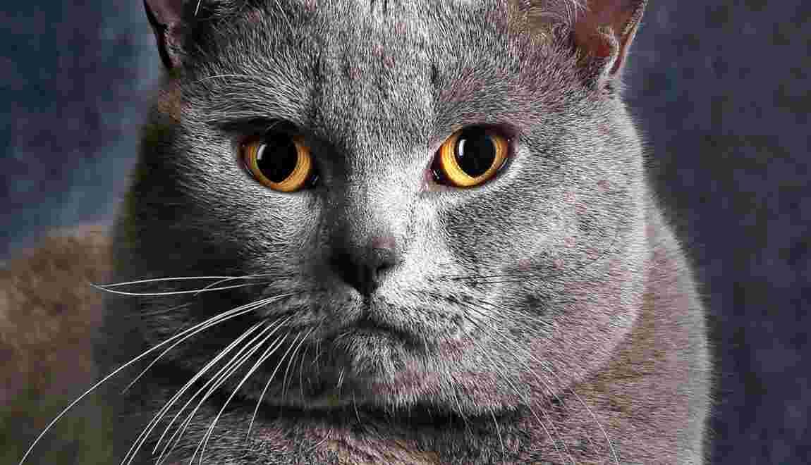 Les chats à l'honneur du nouveau GEO Extra