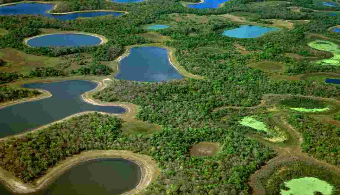 Brésil : nos conseils pratiques pour aborder le Pantanal