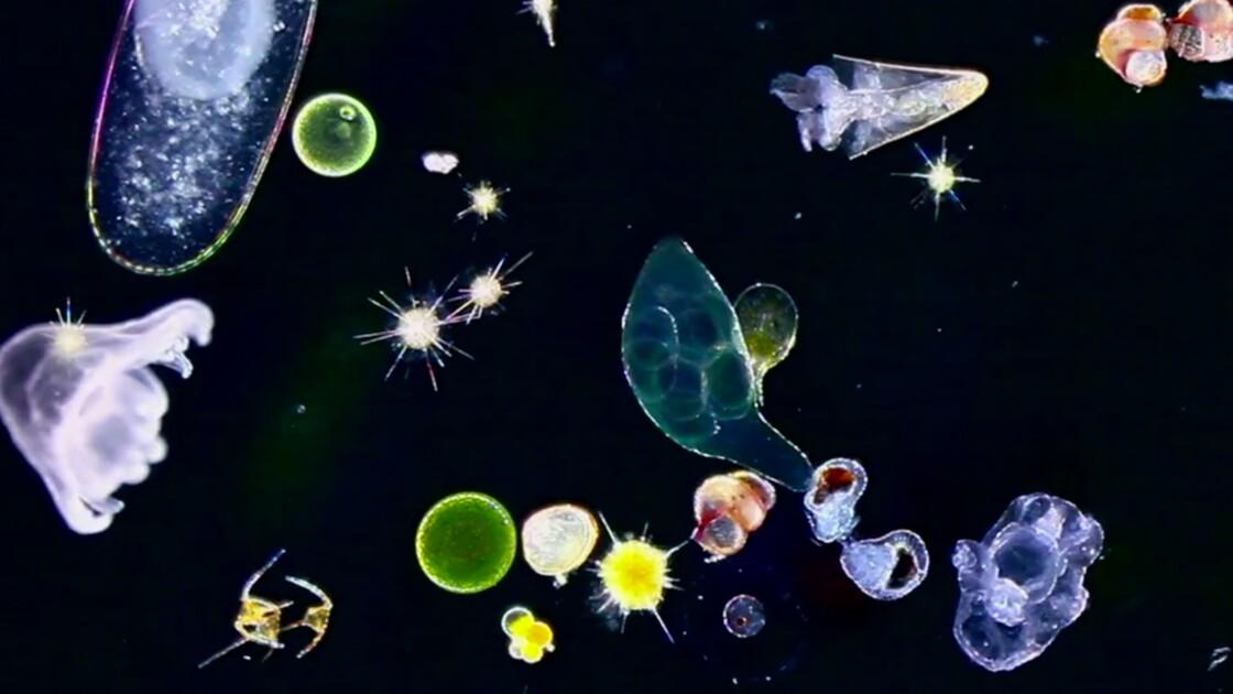 VIDÉO : Au large de Cannes, le festival du plancton