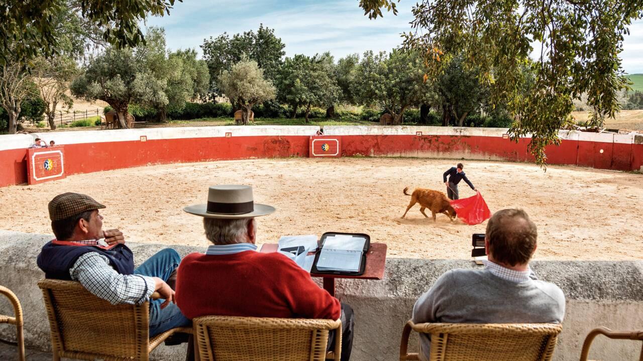 """Andalousie : chez les seigneurs de la """"dehesa"""""""
