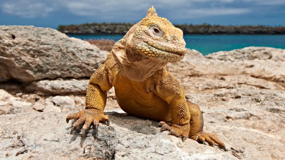 """Les Galapagos furent le laboratoire de Darwin pour """"L'origine des espèces"""""""