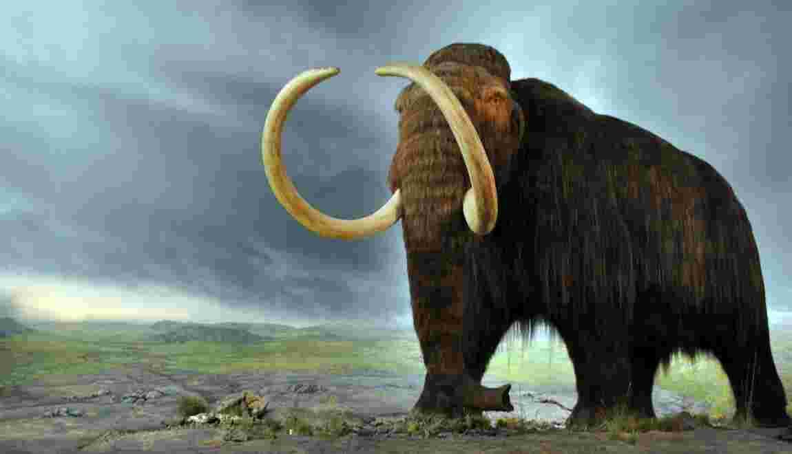 Sibérie : un stupéfiant bestiaire figé dans le pergélisol