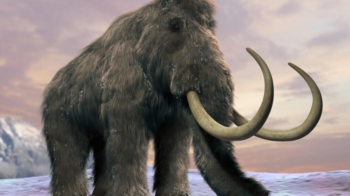 Pourra-t-on un jour faire revivre le mammouth ?