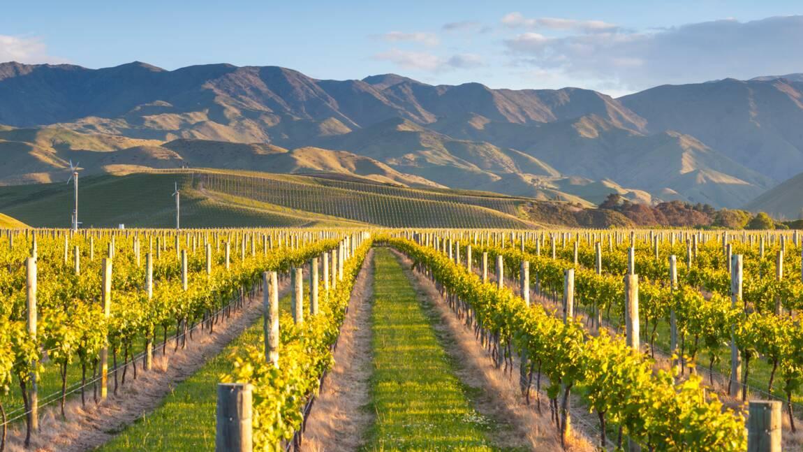 Nouvelle-Zélande : que vaut son vin ?