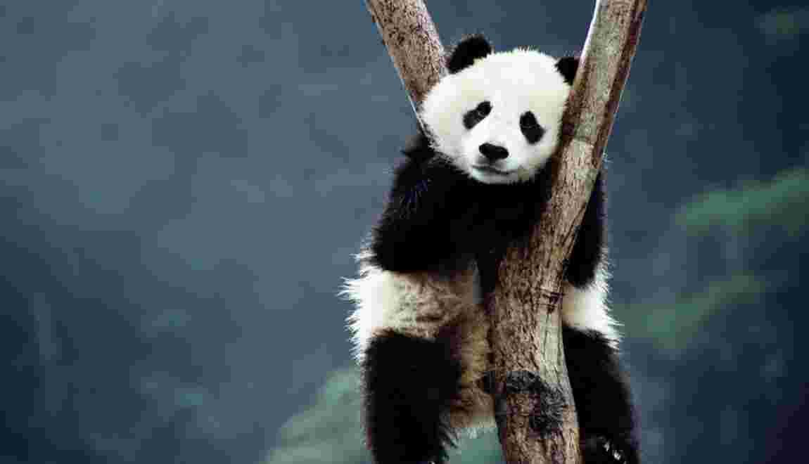 Quiz spécial pandas