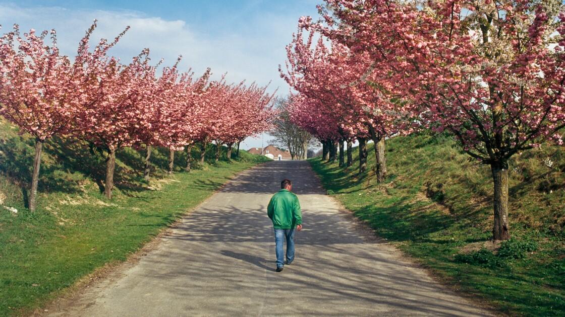 Parcs et jardins : nos astuces pour les photographier