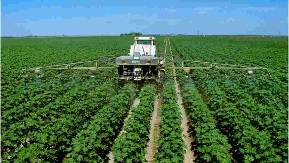 Pesticides : peut-on s'en passer ?