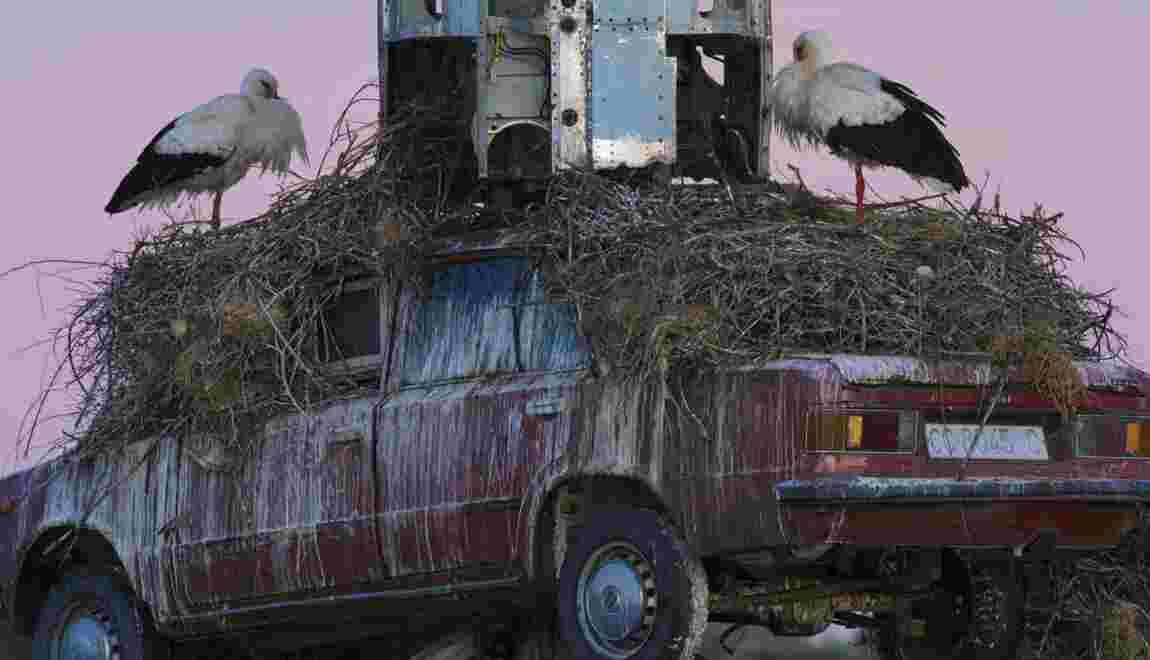 PHOTOS : Le message caché des cigognes