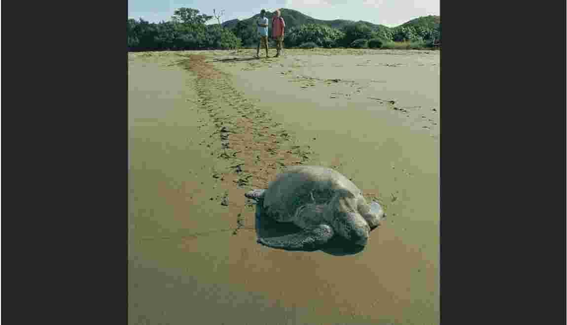Sauver les tortues de mer au Costa Rica