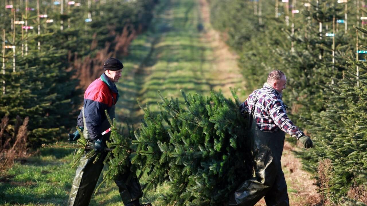 Sapin de Noël : plutôt naturel ou synthétique ?